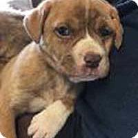 Adopt A Pet :: Willow's Gabby - Chantilly, VA