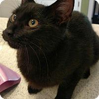 Adopt A Pet :: Jovie - Tampa, FL