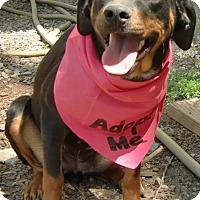 Adopt A Pet :: Sweet Pea - Huntsville, AL