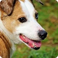 Adopt A Pet :: Sugar - Longview, WA