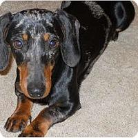 Adopt A Pet :: Gertrude - Bryan, TX