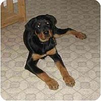 Adopt A Pet :: Karlie - Chandler, IN