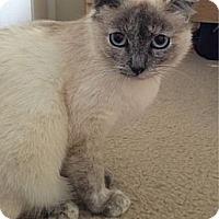 Adopt A Pet :: Alina - Beverly Hills, CA