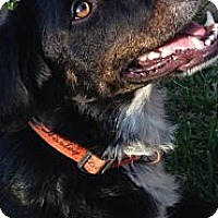 Adopt A Pet :: Toby - Kingwood, TX