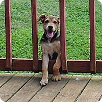Adopt A Pet :: Ballpark - Staunton, VA