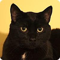 Adopt A Pet :: Taylor - Calgary, AB