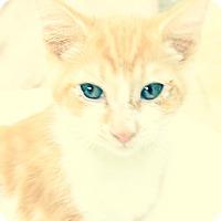 Adopt A Pet :: Jayden - Santa Monica, CA