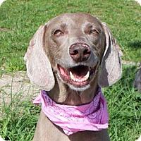 Adopt A Pet :: Hilda - Sarasota, FL