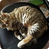 Adopt A Pet :: Mirabelle Fluffy girl - McDonough, GA