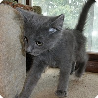 Adopt A Pet :: Mewtwo - Milwaukee, WI