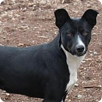 Adopt A Pet :: LILY - Red Bluff, CA
