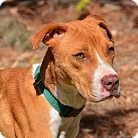 Adopt A Pet :: SASHA - Brooksville, FL