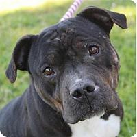 Adopt A Pet :: MISS PIGGY - Red Bluff, CA