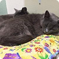 Adopt A Pet :: Tussey - Colorado Springs, CO