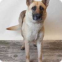 Adopt A Pet :: Lacie - Rockwall, TX