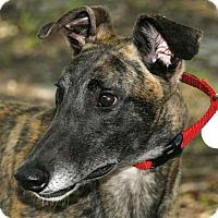 Adopt A Pet :: Jax - Longwood, FL