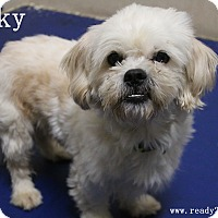 Adopt A Pet :: Rocky - Rockwall, TX