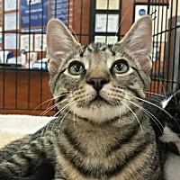 Adopt A Pet :: James - Greensboro, NC