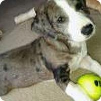 Adopt A Pet :: Happy - Marlton, NJ