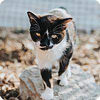 Adopt A Pet :: Winona - Indianapolis, IN