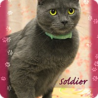 Adopt A Pet :: Soldier - Waterbury, CT