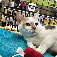 Adopt A Pet :: Sparkles - Northfield, OH