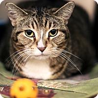 Adopt A Pet :: Kayla - Appleton, WI