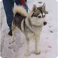 Adopt A Pet :: Magic - Belleville, MI