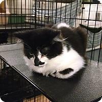 Adopt A Pet :: Tiny Dancer - Centralia, WA