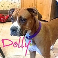 Adopt A Pet :: Dolly - Scottsdale, AZ