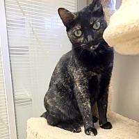 Adopt A Pet :: Muffin - Creston, BC