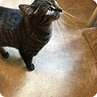 Adopt A Pet :: Sunny-adoption pending - Hanna City, IL