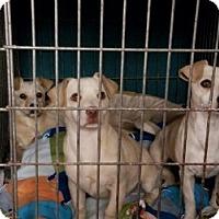 Adopt A Pet :: JULIP - Gustine, CA