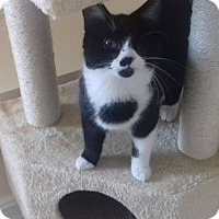 Adopt A Pet :: Gintonic 1 eyed - McDonough, GA