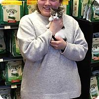 Adopt A Pet :: Azalea - River Edge, NJ