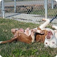 Adopt A Pet :: Wrigley - Humble, TX