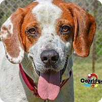 Adopt A Pet :: Kamden - Media, PA