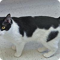 Adopt A Pet :: Bandit - Chambersburg, PA