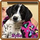 Adopt A Pet :: Rylie