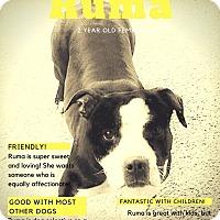 Adopt A Pet :: Ruma - Des Moines, IA