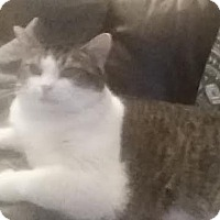 Adopt A Pet :: Oreo (COURTESY POST) - Baltimore, MD
