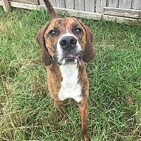 Adopt A Pet :: Dalton - Jackson, MS