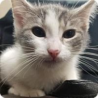 Adopt A Pet :: Jack - Sheboygan, WI