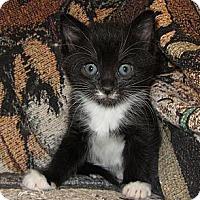 Adopt A Pet :: Hope's Litter - Richfield, OH