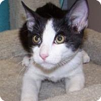 Adopt A Pet :: K-Wilma3-Emilio - Colorado Springs, CO