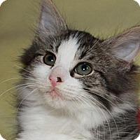 Adopt A Pet :: Barney - Xenia, OH