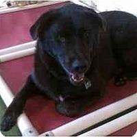 Adopt A Pet :: Rocco - Alexandria, VA
