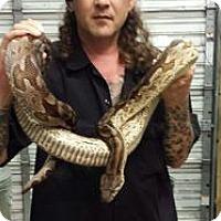 Snake for adoption in HOUSTON, Texas - BOA