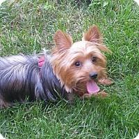 Adopt A Pet :: ADDY - Commerce TWP, MI