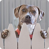 Adopt A Pet :: Gilmore - Courtesy Posting - Rochester/Buffalo, NY